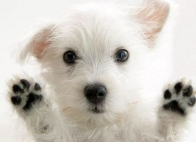 Kako uklopiti psa u dnevne obaveze?