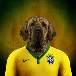brazilski mastif