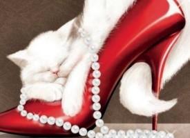 Međunarodna izložba mačaka zakazana za 8. mart
