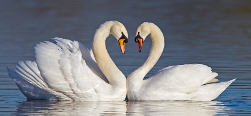 Ljubav za ceo život