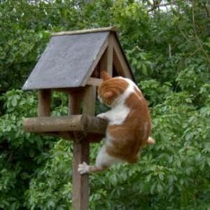 mačka istraživanje 1