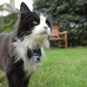 mačka istraživanje