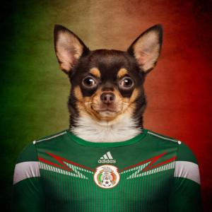 Meksiko - čivava