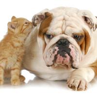 Pas i mačka u istom stanu: Kako da se pripremite za prvi susret?