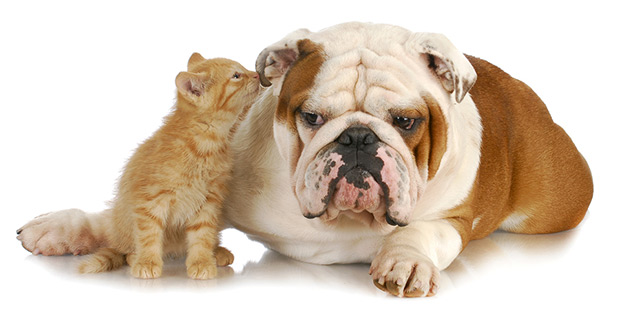 pas i macka u stanu 1
