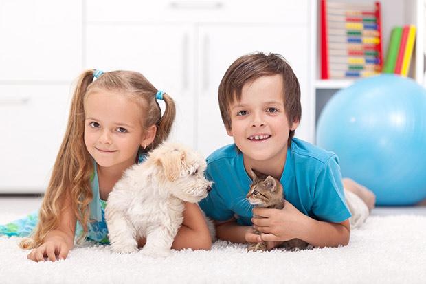 pas i macka u stanu 2