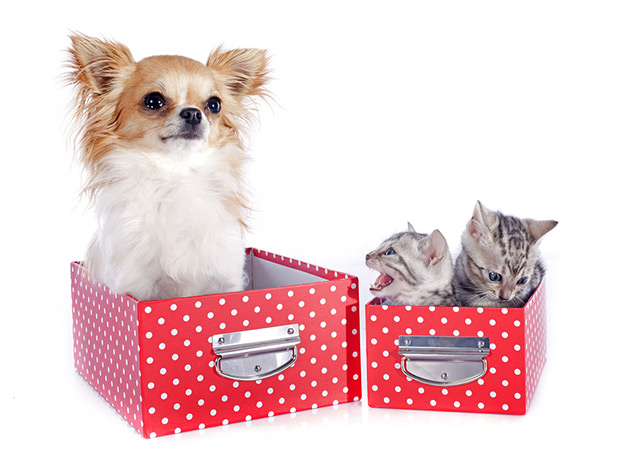 pas i macka u stanu 3