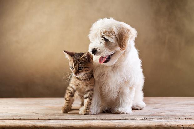 pas i macka u stanu