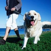 8 načina da svakodnevne šetnje budu zanimljivije i vama i vašem psu