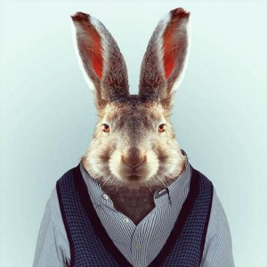 rabbit-guy