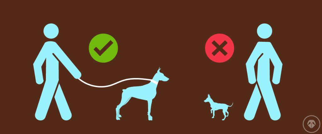 Držanje psa na povocu