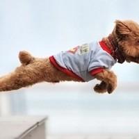 Ekstremi među ljubimcima: najstarije, najveće, najbrže, najmanje rase pasa i mačaka
