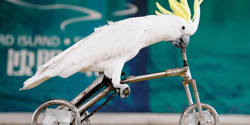 Bird-Olympics4