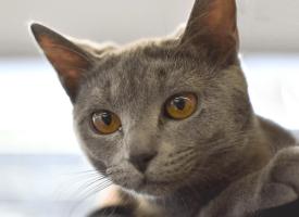Najlepše mace prošetale na Međunarodnoj izložbi (FOTO)