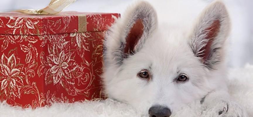 Švajcarski beli ovčar – aktivan pas za aktivne ljude