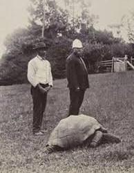 kornjaca slika iz 1900