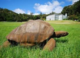 Najstarija životinja na svetu: kornjača Džonotan