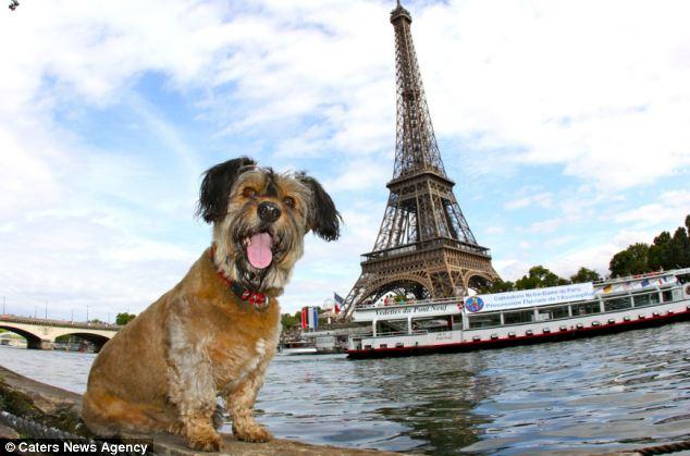 Pas u Francuskoj