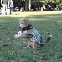 Pas rođen da bude golman (video)