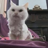 Najstarija mačka na svetu – Pheobe