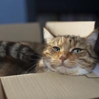Otkrivamo:  Neobično ponašanje mačaka