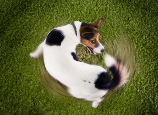 Otkrivamo: Neobične navike pasa