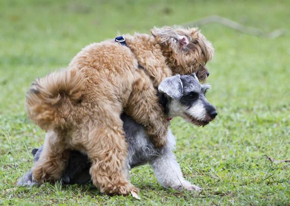 psi i drugi psi