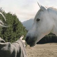 """Uginuo čuveni konj iz """"Gospodara prstenova"""" – Shadowfax"""
