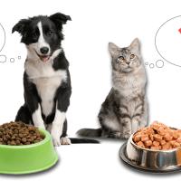 Vlažna hrana ili granule: Koja je bolja za vašeg ljubimca?