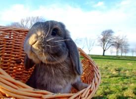 9 stvari koje, možda, niste znali o zečevima