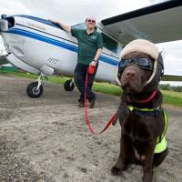 Nebo je granica: Pas dobio počasnu dozvolu za letenje