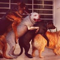 Sve o sterilizaciji pasa i mačaka: Kada je pravo vreme?