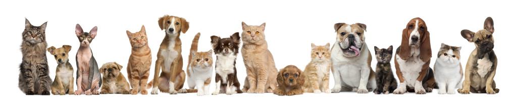 macke i psi