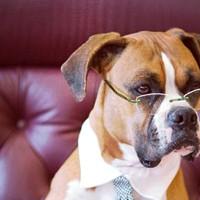 10 čudnih Zakona o životinjama