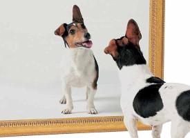 Šta životinje vide u ogledalu?