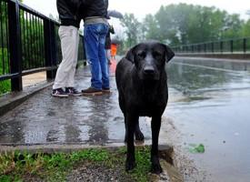 Ljubimci u poplavama: I njima treba pomoć!