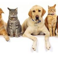 7 zanimljivih činjenica koje niste znali o mačkama i psima