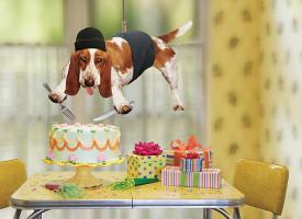 Zašto psi kradu hranu i stvari?