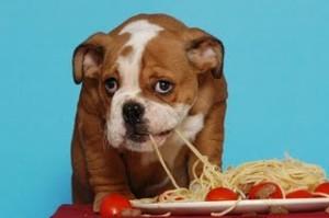 zasto psi kradu hranu