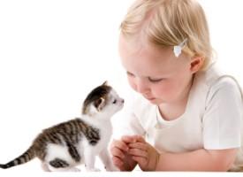 Top 10 rasa mačaka za porodice sa decom