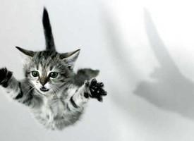 Kako se mačke uvek dočekaju na noge?