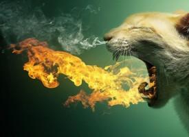 Duvanski dim štetno utiče na zdravlje vaše mačke