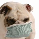 5 saveta da olakšate alergiju svom ljubimcu