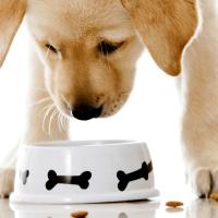 Izaberite najbolju metodu ishrane vašem ljubimcu