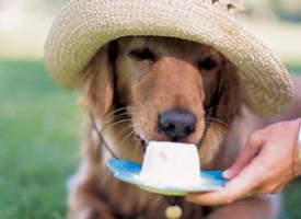 Osvežavajuće poslastice za pse