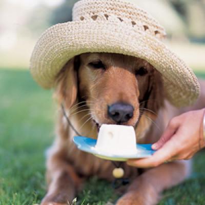 Osvžavajuće poslastice za pse