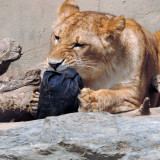 Zoo jeans: Farmerke koje dizajniraju zveri