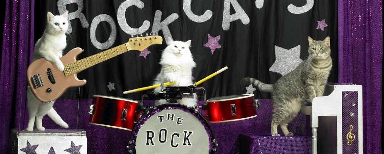 The Rock Cats: Neobičan muzički sastav (VIDEO)