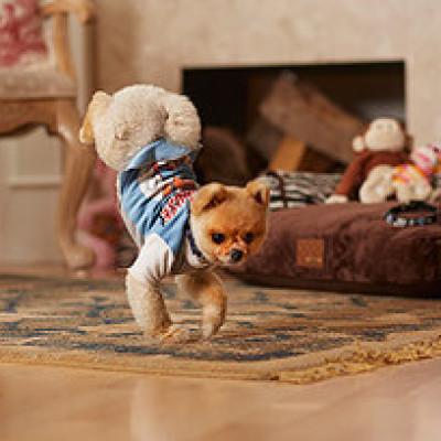 Pas dvostruki Ginisov rekorder u hodanju na dve noge