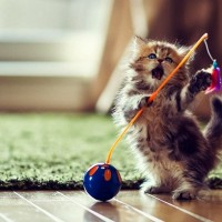 5 mitova o mačićima u koje ne treba verovati